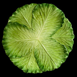 Majolica cabbage dinner plate