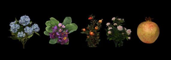 Fleurs et feuillages